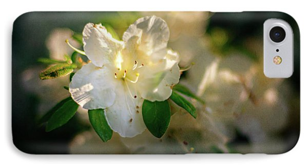 Golden White Azaleas IPhone Case by Tamyra Ayles