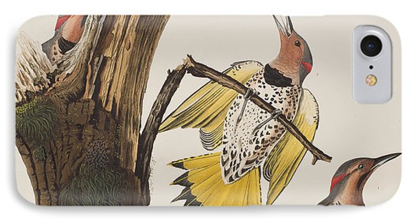Golden-winged Woodpecker IPhone Case by John James Audubon