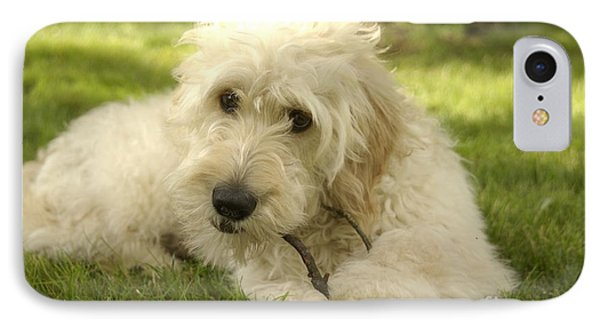 Goldendoodle Puppy And Stick IPhone Case