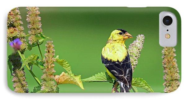 Goldfinch In A Flower Garden IPhone Case