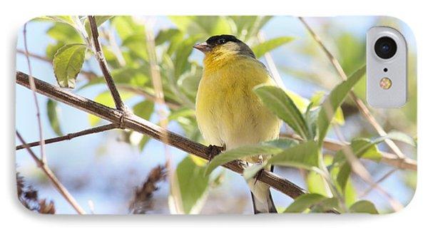 Goldfinch In Spring Tree Phone Case by Carol Groenen