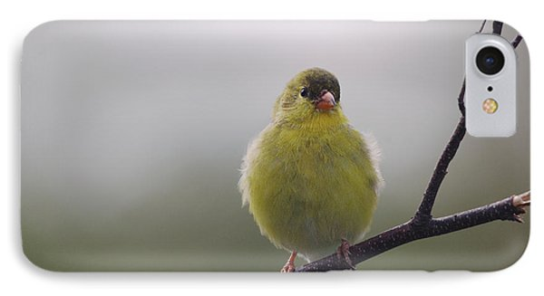IPhone Case featuring the photograph Goldfinch Puffball by Susan Capuano
