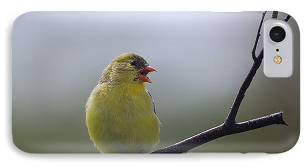 IPhone Case featuring the photograph Goldfinch Song by Susan Capuano