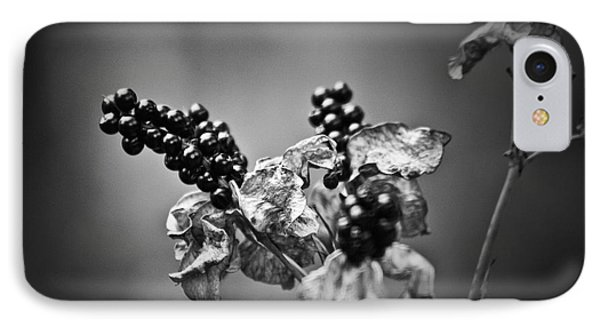 Gone To Seed Blackberry Lily Phone Case by Teresa Mucha