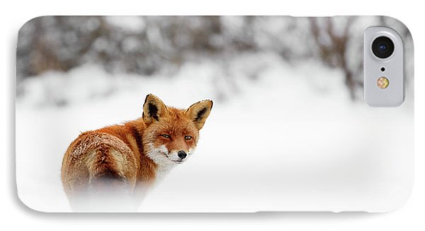 Gonna Walk And Don't Look Back - Red Fox In The Snow IPhone Case