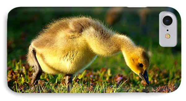 Gosling In Spring IPhone Case by Paul Ge