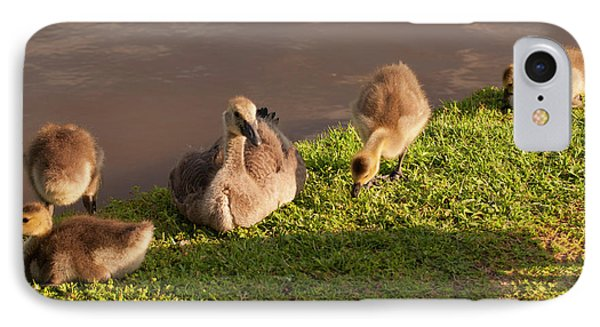 IPhone Case featuring the photograph Goslings Basking In The Sunset by Chris Flees