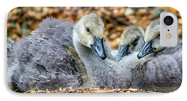 Goslings IPhone Case by Irwin Seidman