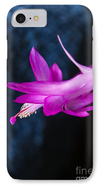 Granny's Christmas Cactus IPhone Case by Marilyn Carlyle Greiner