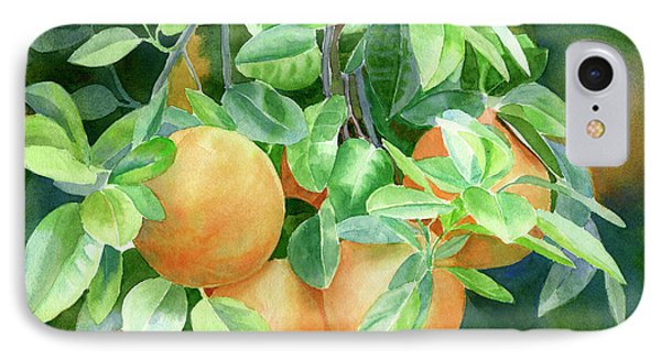 Grapefruit With Background IPhone Case by Sharon Freeman