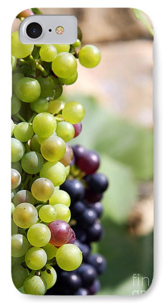 Grapes IPhone Case by Jane Rix