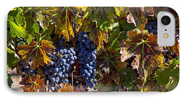 Grapes Of The Napa Valley Phone Case by Garry Gay