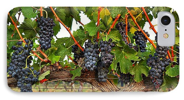 Grapes Of The Yakima Valley IPhone Case