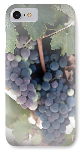 Grapes On The Vine I IPhone Case