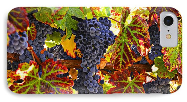 Grapes On Vine In Vineyards IPhone 7 Case by Garry Gay