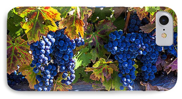 Grapes Ready For Harvest Phone Case by Garry Gay