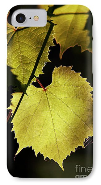 Grapevine In The Back Lighting Phone Case by Michal Boubin