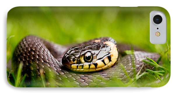 Grass Snake - Natrix Natrix IPhone Case by Roeselien Raimond