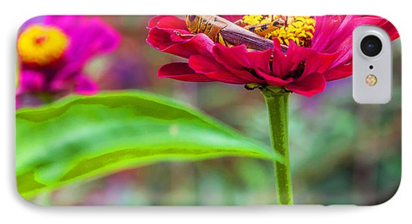 Grasshopper And Flower IPhone Case by Edward Peterson