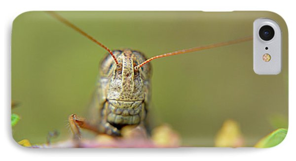IPhone Case featuring the photograph Grasshopper by Janice Spivey