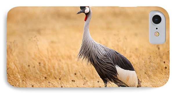 Gray Crowned Crane Phone Case by Adam Romanowicz