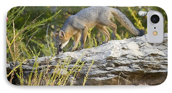 Gray Fox Hunting The Bluff IPhone Case
