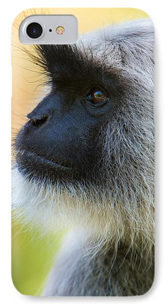 Gray Langur Monkey, Kanha National IPhone Case by Panoramic Images