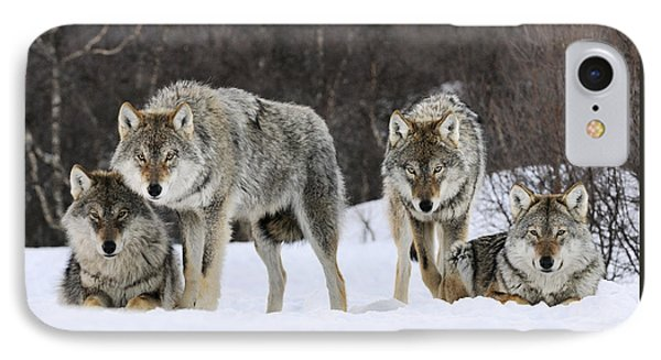Gray Wolves Norway IPhone Case
