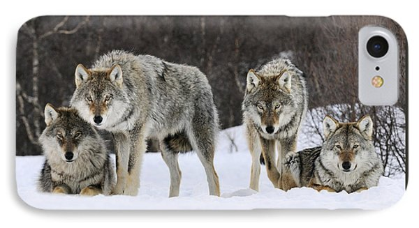 Gray Wolves Norway IPhone Case by Jasper Doest