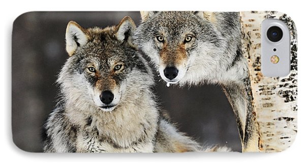 Gray Wolf Canis Lupus Pair In The Snow IPhone Case