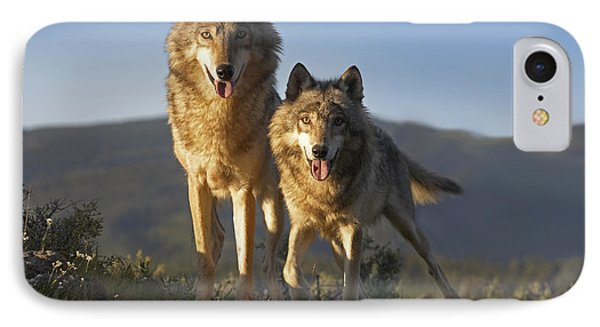 Gray Wolf Canis Lupus Pair Standing IPhone Case by Tim Fitzharris