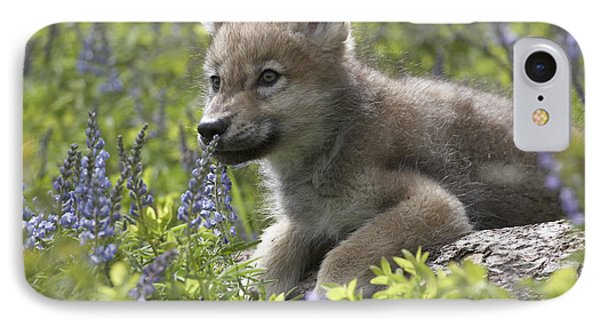 Gray Wolf Canis Lupus Pup Amid Lupine Phone Case by Tim Fitzharris