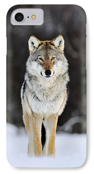Gray Wolf In The Snow IPhone 7 Case
