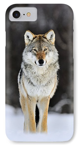 Gray Wolf In The Snow IPhone Case by Jasper Doest