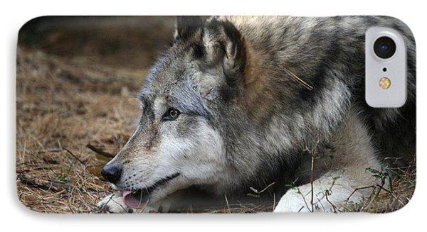 Gray Wolf Phone Case by Karol Livote