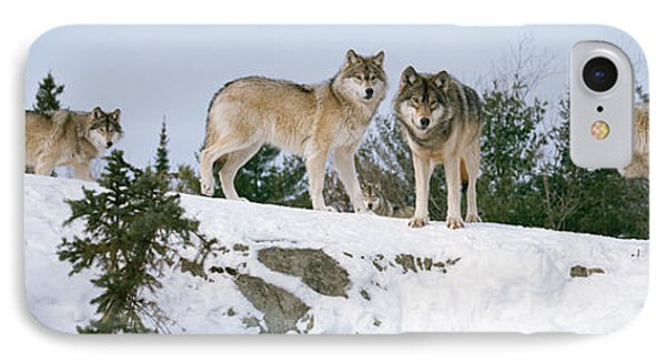 Gray Wolves Canis Lupus In A Forest IPhone Case by Panoramic Images