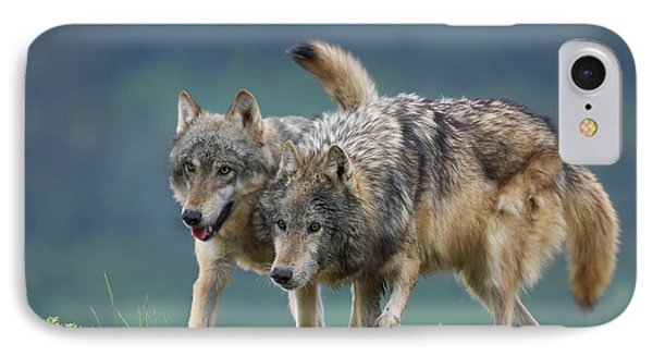 Gray Wolves IPhone Case by Tim Fitzharris