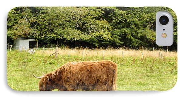 IPhone Case featuring the photograph Grazing by Christi Kraft