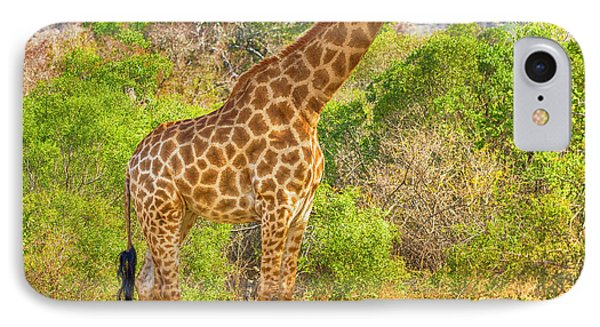 Grazing Giraffe IPhone Case