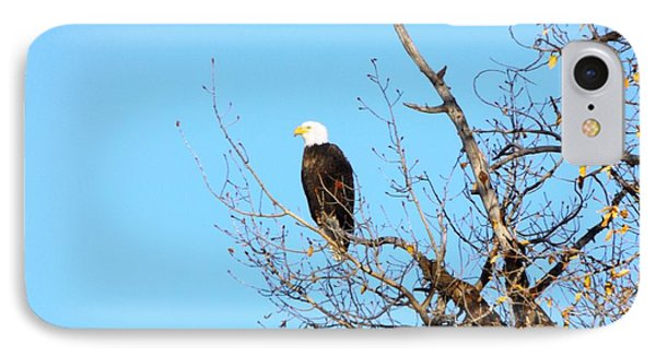 Great American Bald Eagle IPhone Case