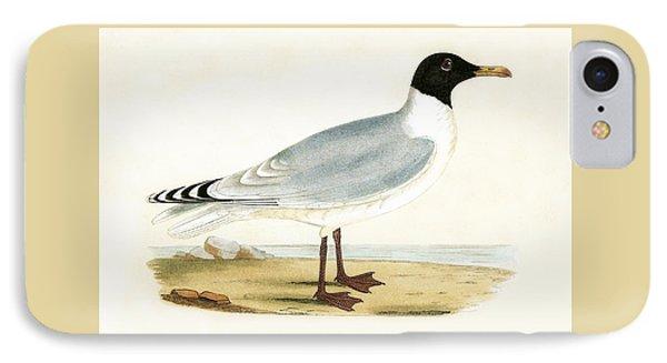 Great Black Headed Gull IPhone Case