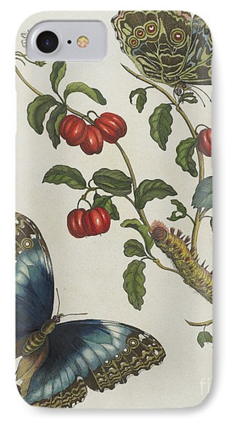 Great Blue Butterflies And Red Fruits IPhone Case by Maria Sibylla Graff Merian