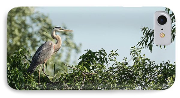 Great Blue Heron  2015-18 IPhone Case by Thomas Young