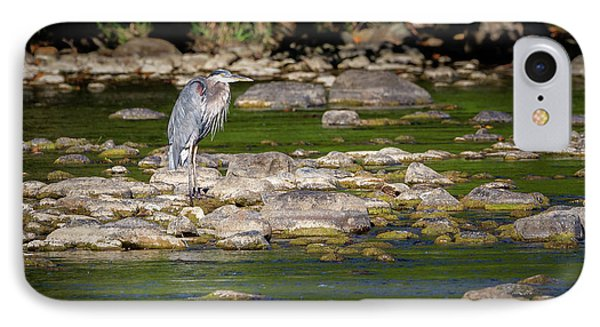 Great Blue Heron 2016 IPhone Case by Bill Wakeley