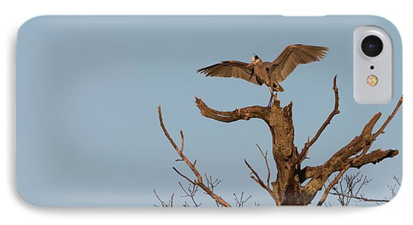 Great Blue Heron 2017-7 IPhone Case by Thomas Young
