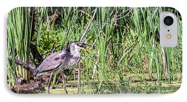 Great Blue Heron And Blue Gill IPhone Case by Edward Peterson