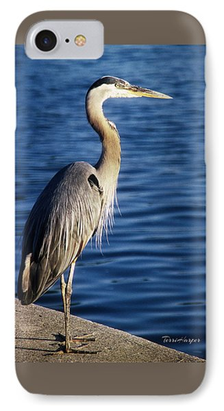 Great Blue Heron At Put-in-bay IPhone Case