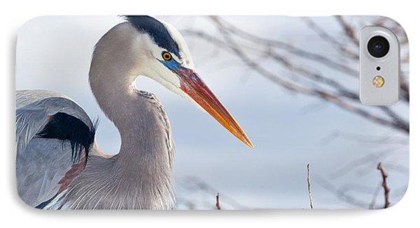 Great Blue Heron At Wakodahatchee Wetlands IPhone Case by Michelle Wiarda