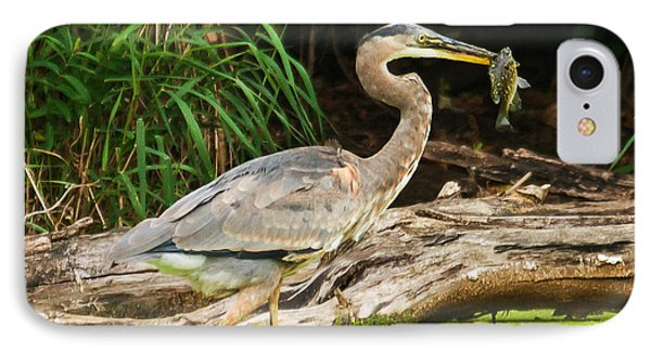 Great Blue Heron Catch IPhone Case by Edward Peterson