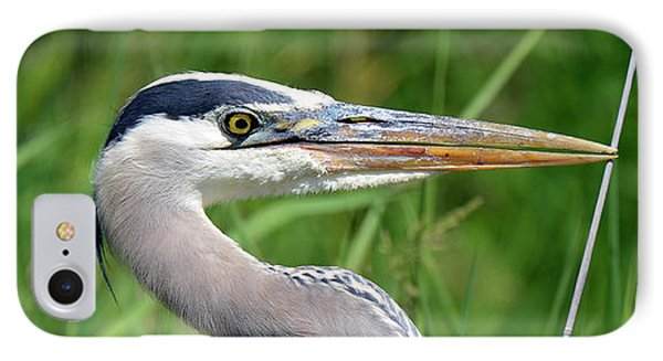 Great Blue Heron Close-up IPhone Case